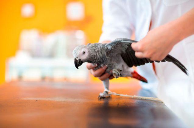 Curso de Auxiliar Veterinario Especialista en Animales Exóticos o NAC