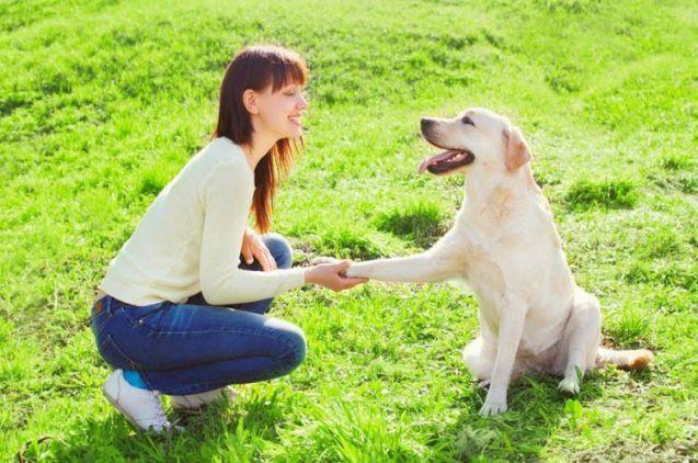 Curso de Psicología Canina y Felina