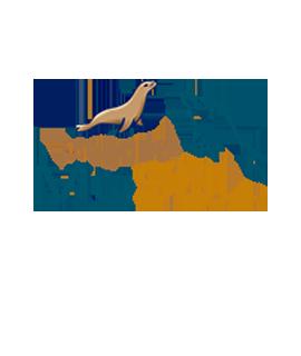 MySQL/MariaDB