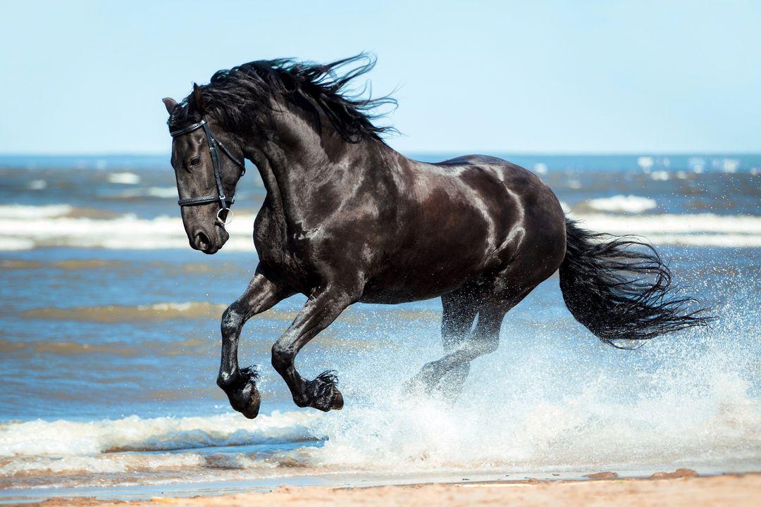 Rennen met paarden