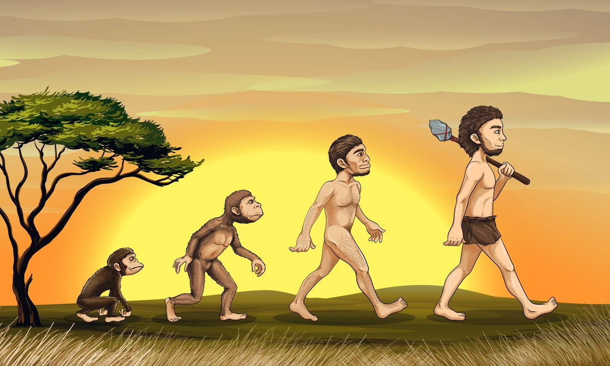 Mechanisme achter evolutie