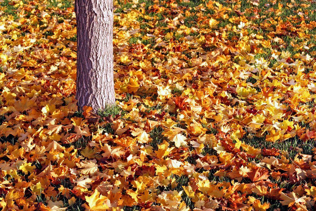 Tijdens de herfst