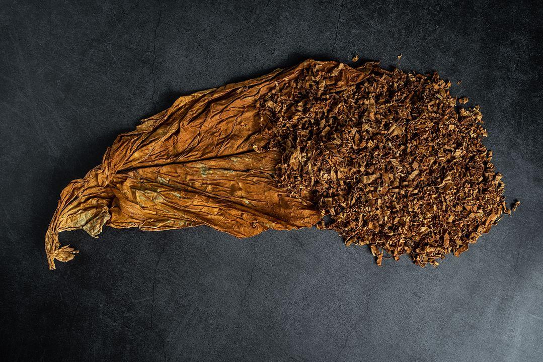 Gedroogde tabaksbladeren bevatten een hoge concentratie nicotine.
