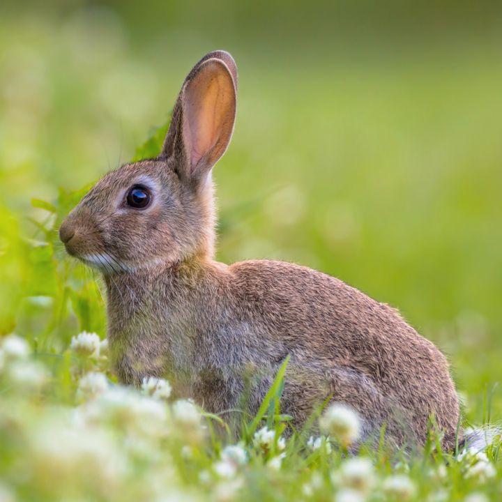 Een sprong konijnen