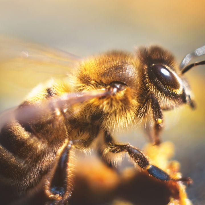 Een volk bijen