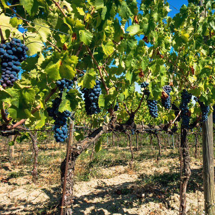 1 van de grootste wijnproducenten ter wereld