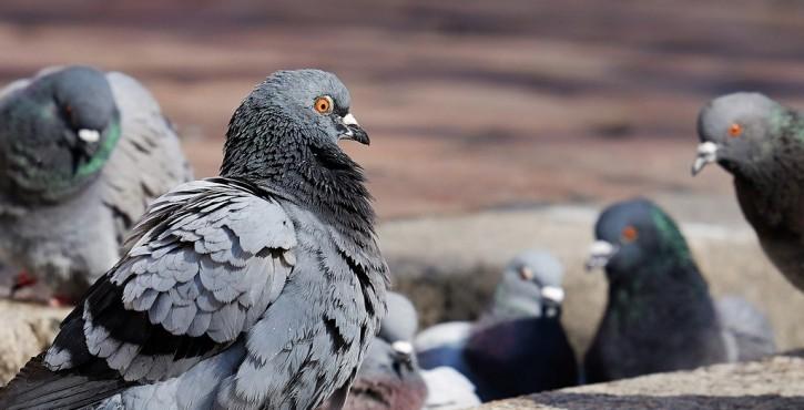 Autogestion, piège à pigeons ?