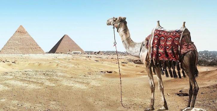 Participation : le goût du chameau