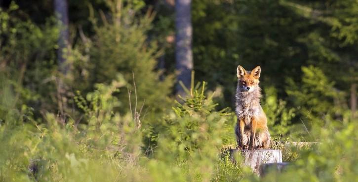 La seule autorisation de déplacer une hutte de chasse ne vaut pas autorisation de s'en servir pour chasser !
