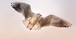 Un pigeon flashé par un radar