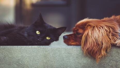 L'avocat, la protection des animaux, et le droit animalier