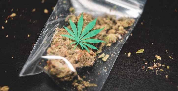 Consommation de cannabis : a licence to kill ?