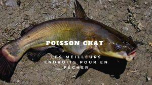 poisson chat