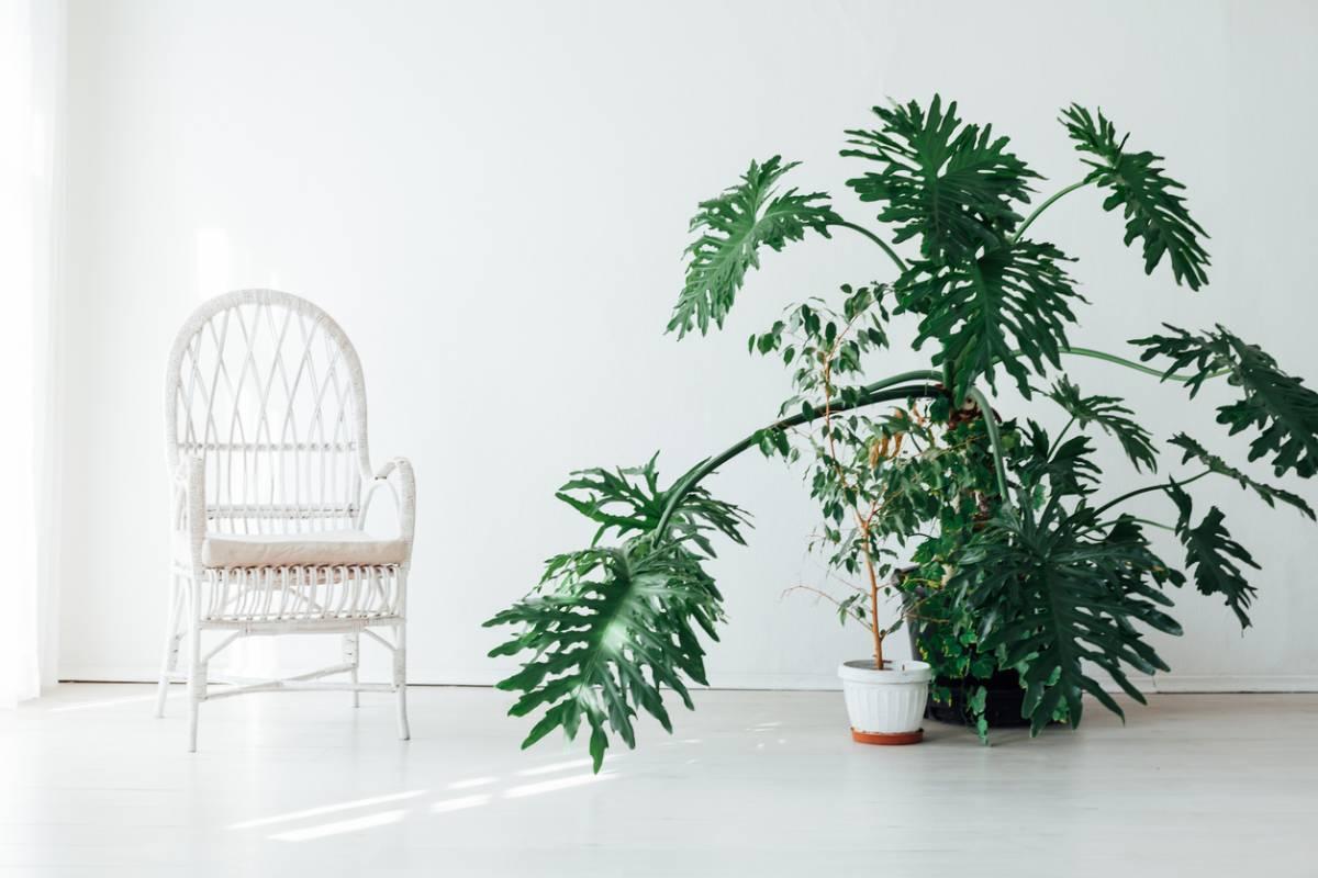visuel-artificielles-avantages-plantes-quels.jpg