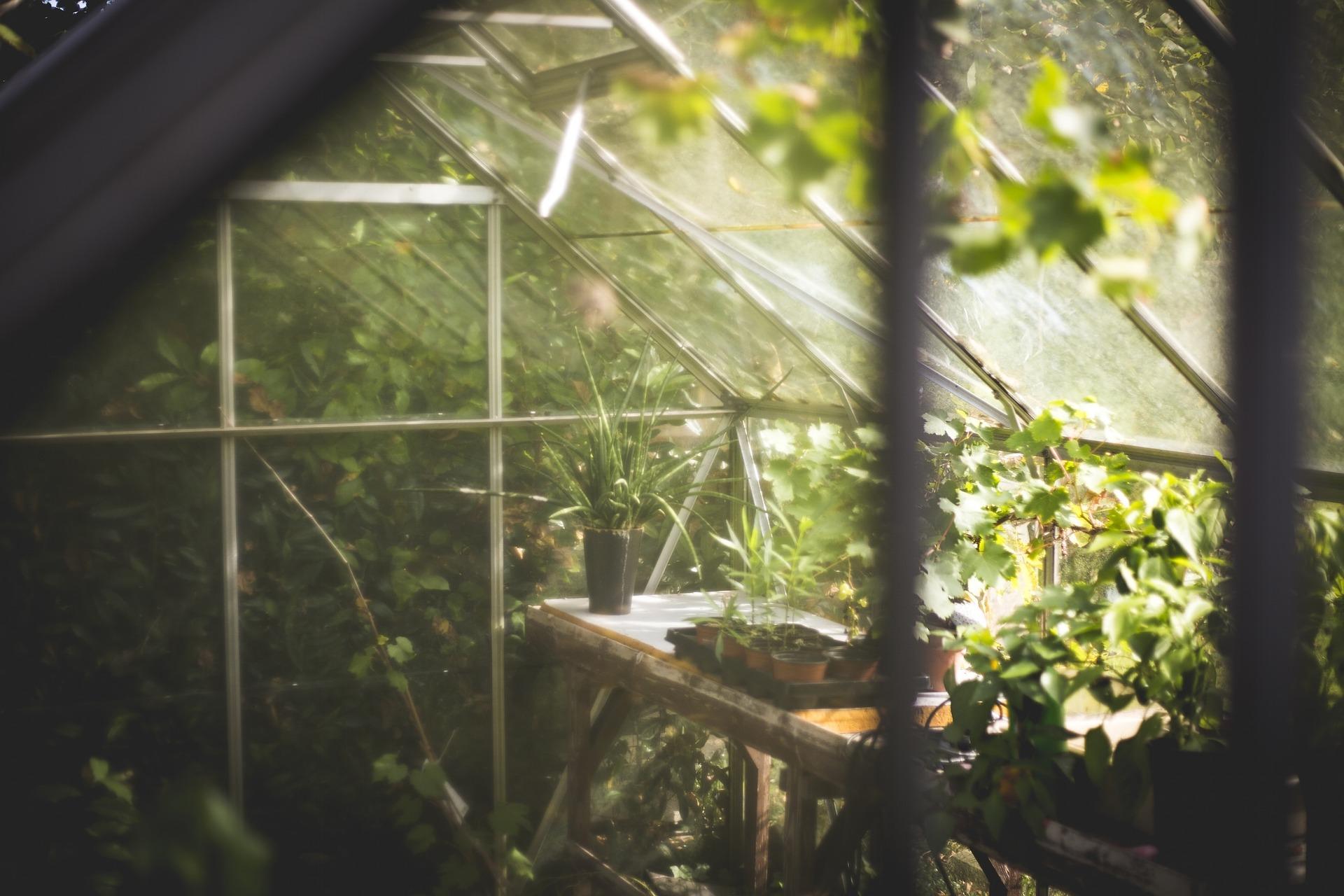 Six_plantes_d_intérieur_et_jardinières_à_essayer_ce_printemps