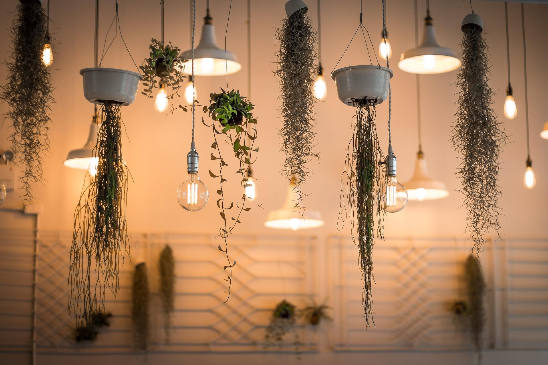Comment_prendre_soin_des_plantes_à_la_maison
