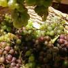 Le Chemin des Vignes - Uccle