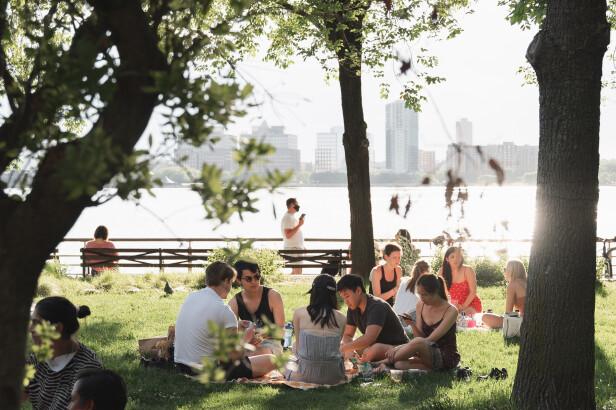 Picknick, het openbare terras