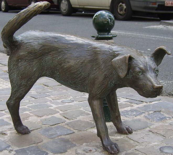 Bruxelles, une ville adaptée aux chiens