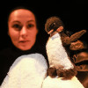 Le voyage de Penguin