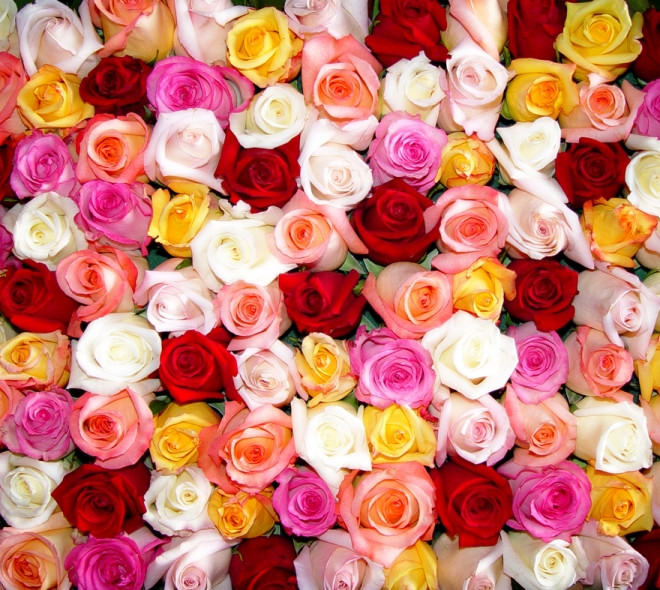 Pick the right rose !