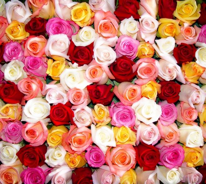 Kies de juiste roos !