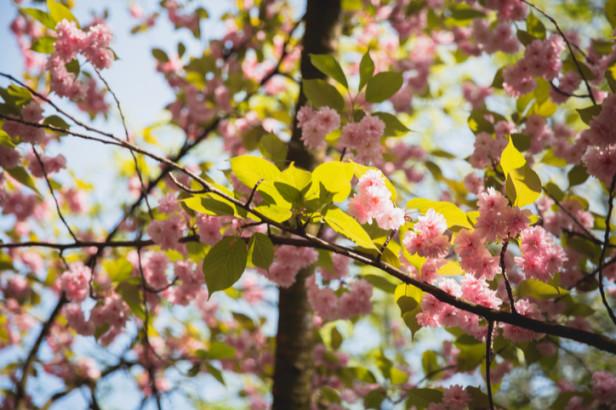 Brusselse parken waar het aangenaam vertoeven is in de lente