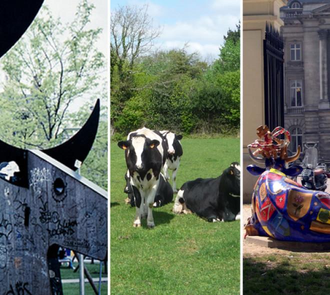 Top 5 des vaches à Bruxelles