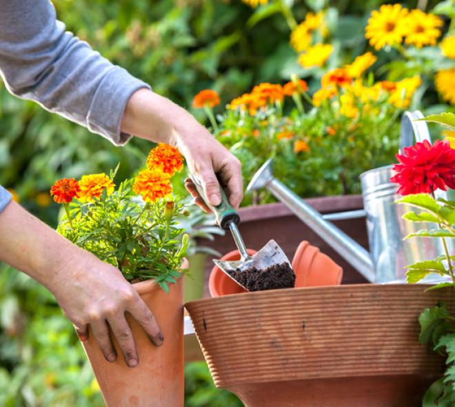 Comment réussir son premier jardinage de printemps