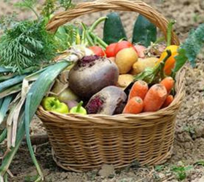 Organic, it's fantastic!