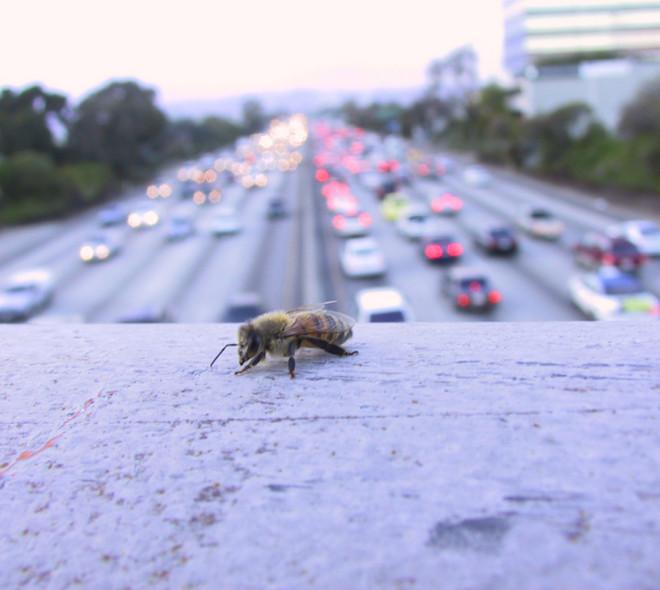 Bruxelles trop polluée? Demandez aux abeilles!