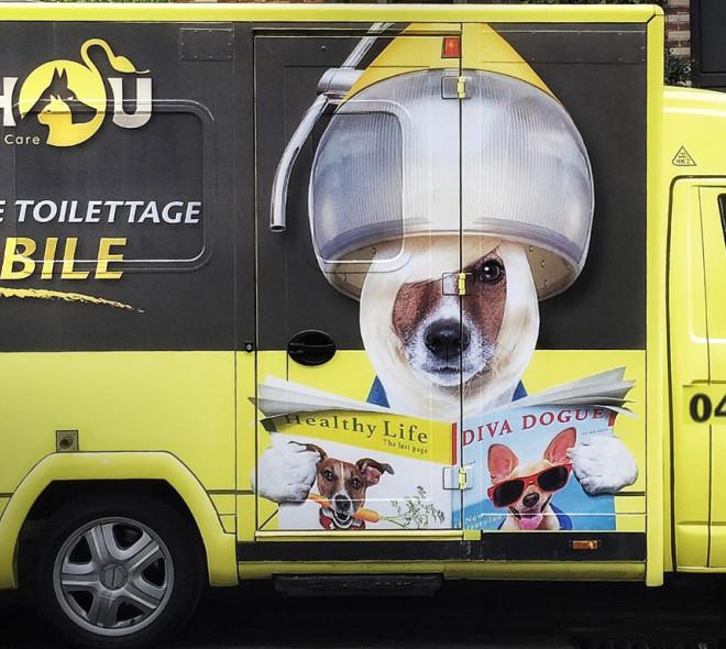 Sishou: la nouvelle 'pet mobile' qui relooke votre animal de compagnie