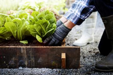 Chez Peas & Love, les fermiers plantent, vous récoltez