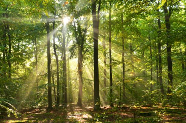 Wood Wide Web: het eerste virtuele stadsbos in Brussel