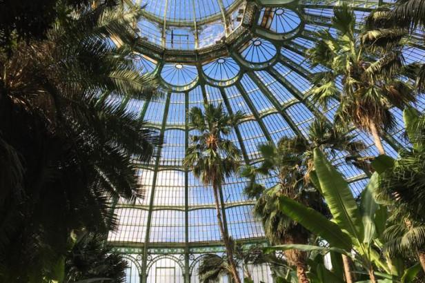 Les Serres Royales de Laeken : un joyau architectural et tropical à visiter