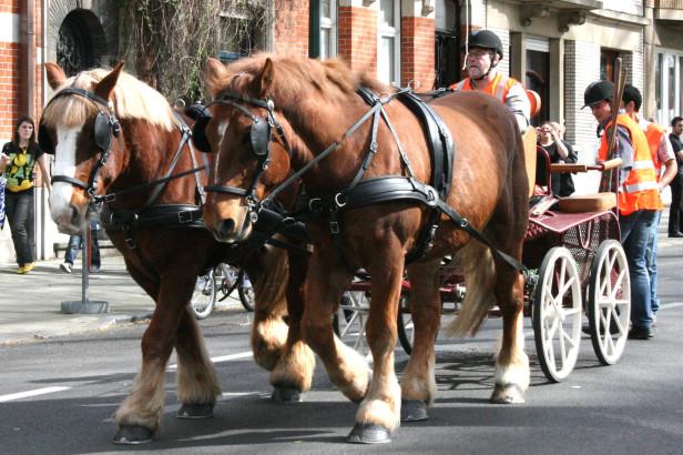 Door paarden getrokken verzameling: trek paarden aan om onze afval op te halen