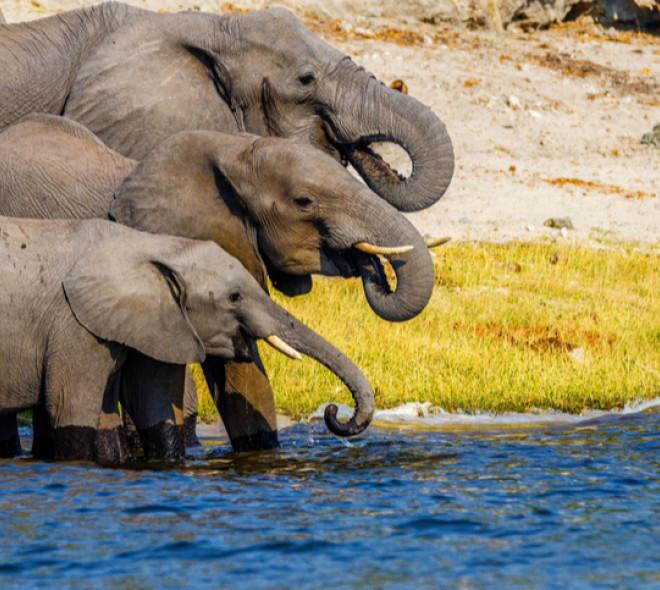 Sors tes dents ! : la campagne de sensibilisation sur le commerce de l'ivoire illégal