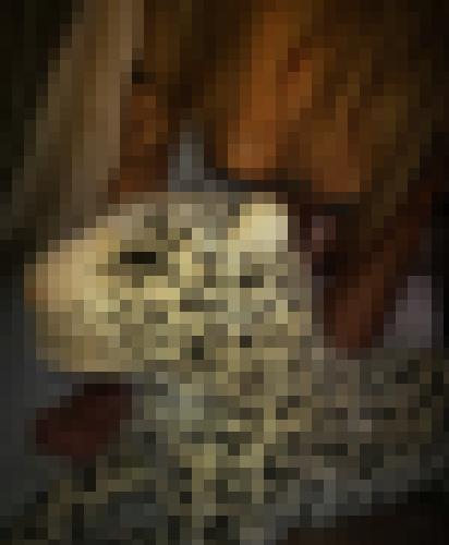 Foto de Lady Bird en Abierto a todos