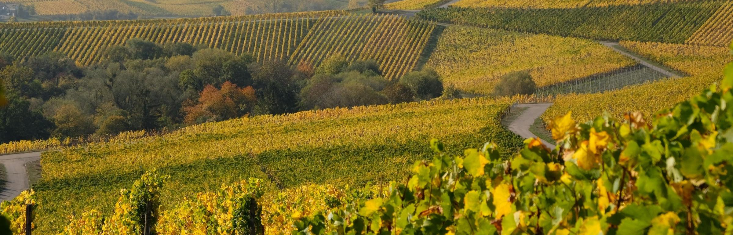 Banner Domaines Vinsmoselle