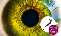 PREMIO INTERNACIONAL ARTES VISUALES CIUTAT DE PALMA ANTONI GELABERT 2020