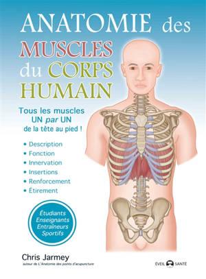Anatomie des muscles du corps humain : tous les muscles un par un de la tête au pied !
