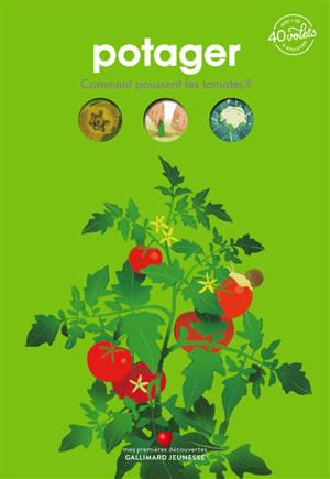 Potager : comment poussent les tomates ?