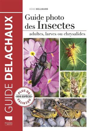 Guide photo des insectes : adultes, larves ou chrysalides