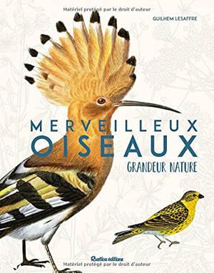 Merveilleux oiseaux grandeur nature : identifier facilement les oiseaux du jardin !