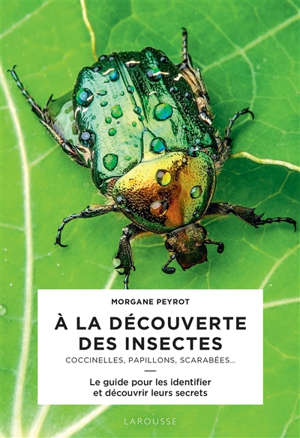 A la découverte des insectes : coccinelles, papillons, scarabées... : le guide pour les identifier et découvrir leurs secrets