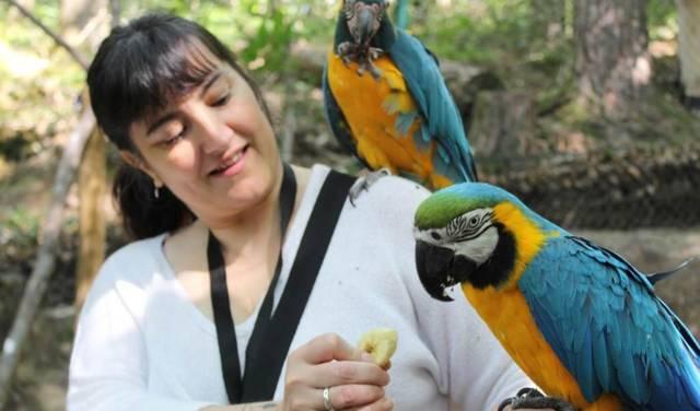 Animalier d'un jour : une participante nourrit les perroquets