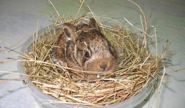 petit lapin de viendra grand