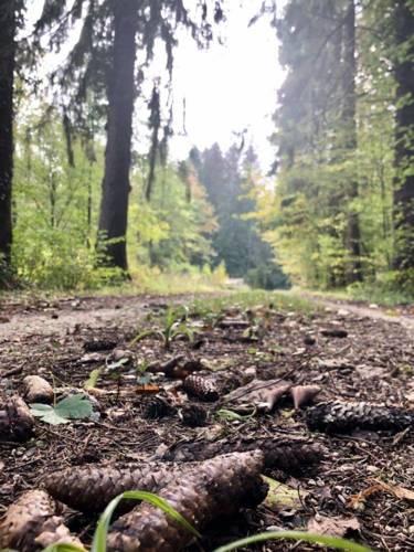 ©Cassandre Gesnot - La Croix aux Bois (2).jpg