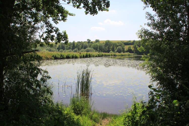 Vieil étang de Bairon