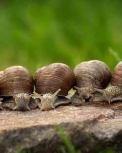À la Découverte des Escargots des Tourbières des Sources de la Bar